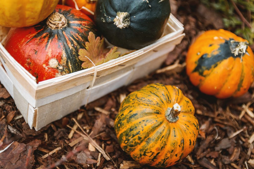courge automne hiver