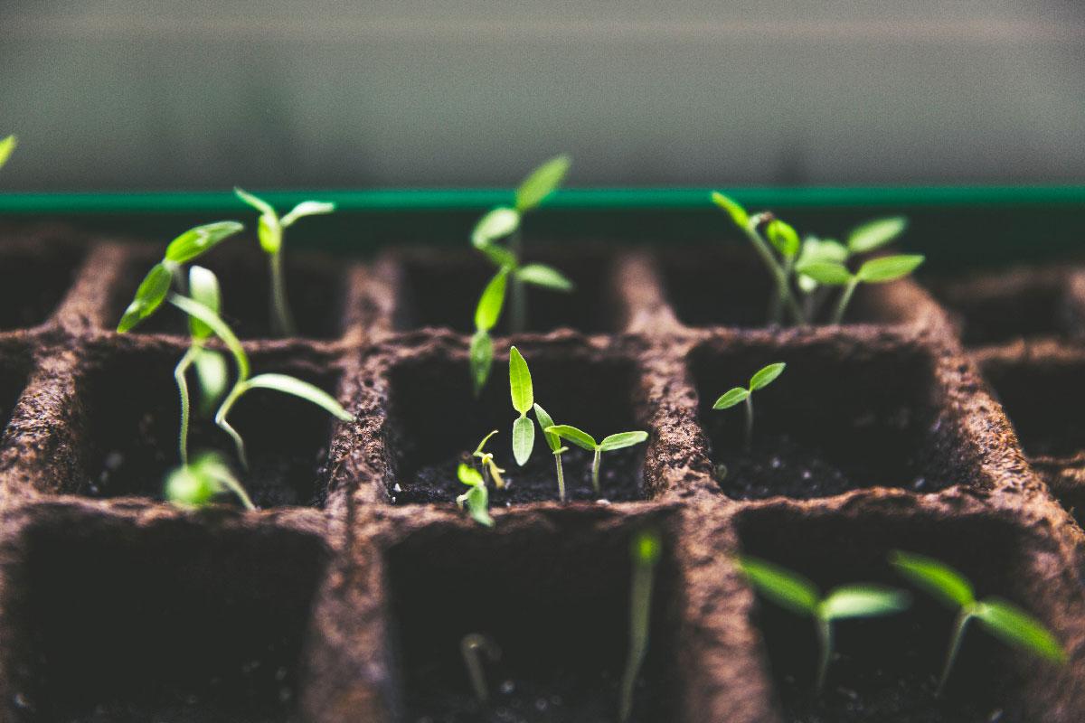 bio-terre-epicerie-jardin-partager-bio