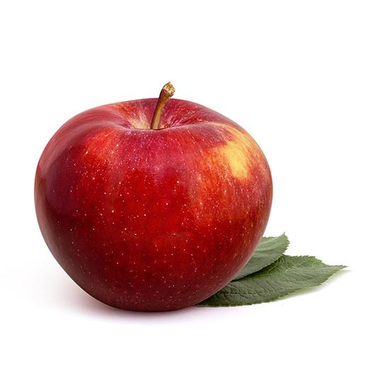 bio terre fruits légumes proposer vos produits