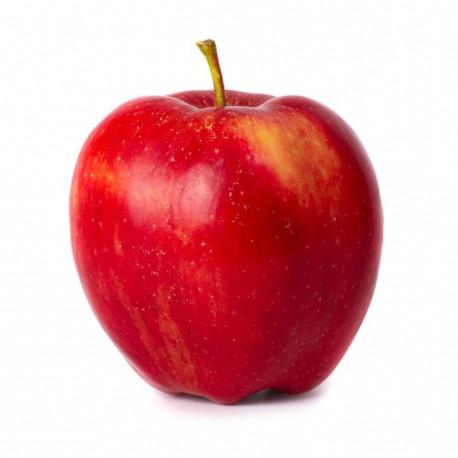 bio terre fruits et legumes proposer vos produits