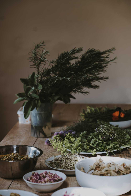 Fortifier-vos-défenses-naturelles-grâce-aux-plantes
